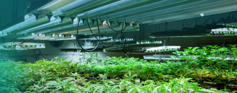 Cannabis blog image